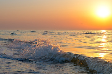 Fotomurais - sunrise over the sea horizon, waves, splashes, bird gull