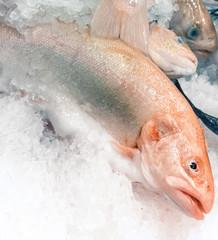 fresh Salmon trout