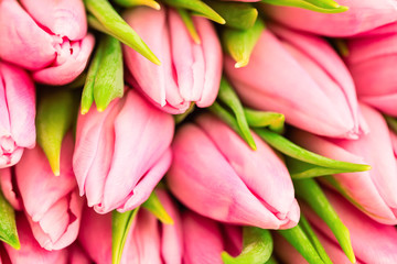 Nice natural bouquet from pink tulips as a romantic background. Selective focus. Pink tulips close up. Pink tulips spring flowers. Mothersday background.