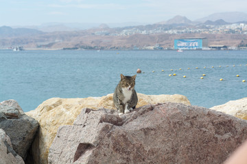 Cats of Eilat, Israel. Many cats leave on streets and beaches of Eilat, they protect the city from rats and snakes