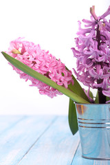 Background with fresh pink, violet hyacinths in metal bucket on cyan wooden planks. Selective focus. Place for text.Spring flowers.The perfume of blooming hyacinths is a symbol of early spring.