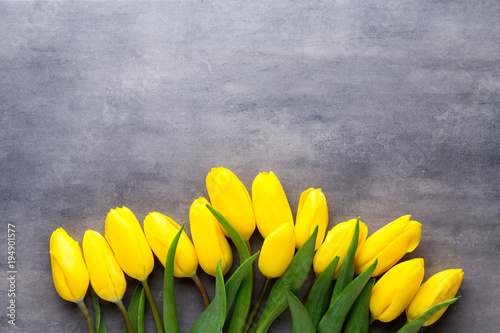 Yellow spring flowers tulip on a gray background stock photo and yellow spring flowers tulip on a gray background mightylinksfo