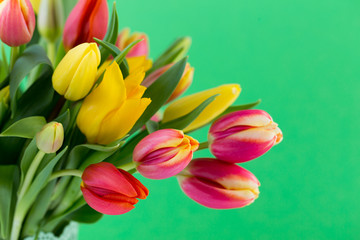 A colorful spring greetings card with tulips for Easter, Mother's Day.