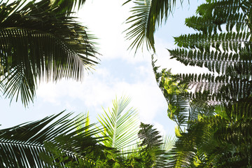Bright tropical leaf on sky background. Coco palm tree top silhouette on sky.