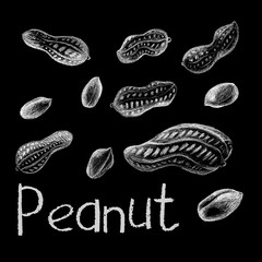 Peanut nut by white chalk on black background. Peanut clean and in shelhand-drawn illustration.