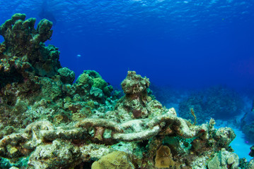 A rusty chain has been left abandoned on a tropical coral reef. The metal has been underwater for so long that it now has coral starting to grow on the links