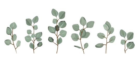 Set of eucalyptus branches isolated on white background.