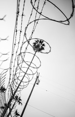 From the ground looking up at barbed wire and razor wire along a chain link fence with a palm tree framed by the circles of razor wire in monochrome