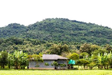 A house in a banana park near the mountain.