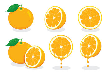 illustration fresh orange, vector