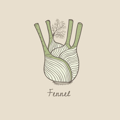Illustration of vegetable