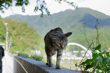 Taiwan monkey cave, cat gathering place, stone wall of the cat,