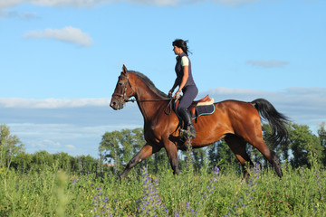 Young rider woman galloping on bay horse on meadow
