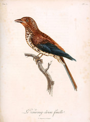 Illustration of a bird.
