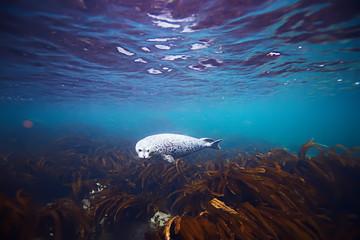 seal underwater photo in wild nature