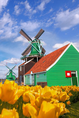 Traditional Dutch windmills with tulips in Zaanse Schans, Amsterdam area, Holland