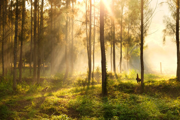 sunlight breaking through the trees and rays of light,Thailand