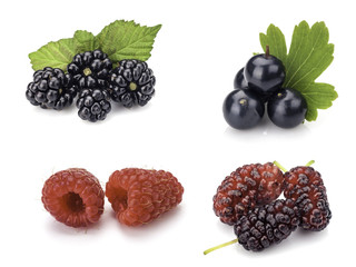 Collection of berries on white
