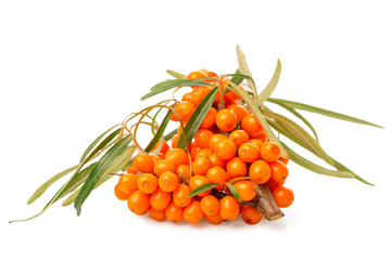twig of sea buckthorn berries in shape heart is isolated on white background, close up