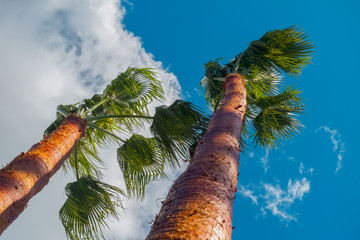 palm trees on sky