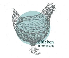 Vector hand drawn chicken illustration. Retro engraving style. Sketch farm animal drawing. Hen logo template.