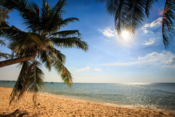 Palms Bend over Sand Beach against Sea under Sunlight