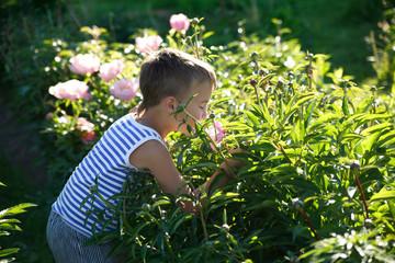 A little boy on a summer evening in a garden among peonies.