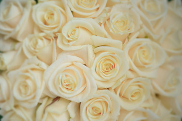 Beautiful ivory large roses close-up shot, floral arrangement for wedding or celebrations, with bokeh effect, copy space and selective focus