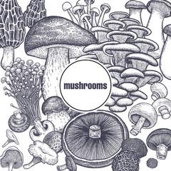 Edible mushroom poster.