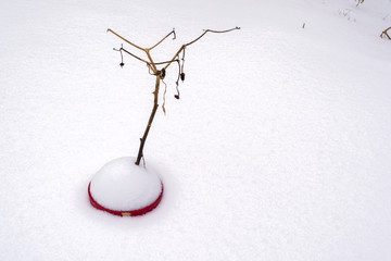 A dead plant in a pot filled with thick snow - Nature abstract 3