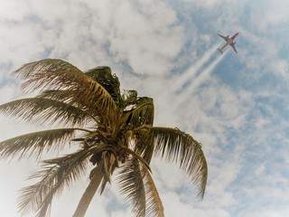 Palm trees, plane in the sky