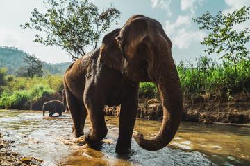Elephant walking out from waterhole in zoo