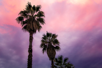 palm trees on the background of fantastically beautiful sky