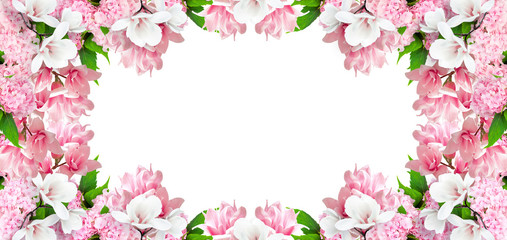 Magnolia and hortensia flowers isolated on white background and place for your photo or text