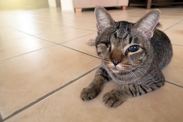 blind cat has one eye. injured kitty