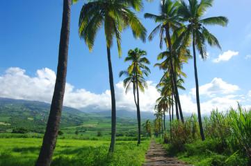 La Réunion - L'Étang-Salé, le Gol