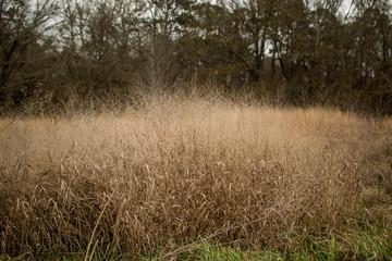 Overgrown weeds in field Wall mural