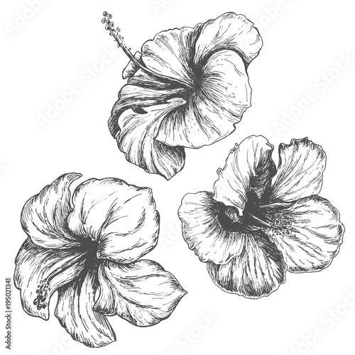 Tropical Hibiscus Flower Set Black Hand Drawn Monochrome Etching