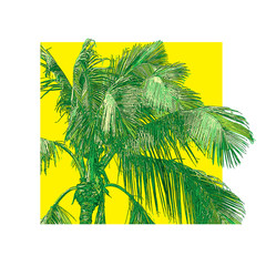 Green leaves and branches of tropical palm tree close-up. 