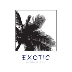 Leaves silhouette of coconut palm tree. Realistic black vector illustration isolated on white background. Template, design element for summer holiday, travel and vacation concept.