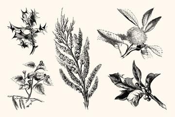 Vintage Plants and Flowers - Vintage Handmade Floral Line Art