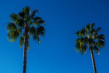 Two palms on a sky background