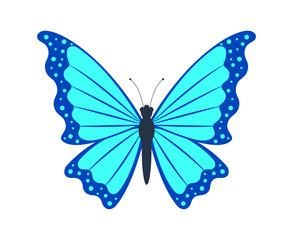 Butterfly isolated on white background. Vector illustration.
