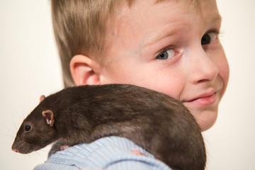 pet a gray domestic rat sitting at a boy on his shoulder