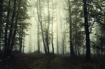 dark green foggy woods