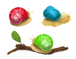 snail animal with abstract colors isolated on white background