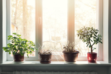 indoor plants in pots on sunny window sill