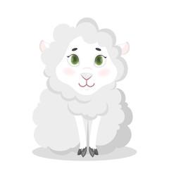 Isolated baby sheep.