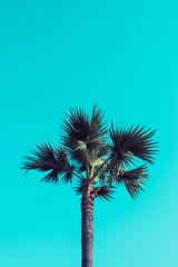 Sugar palm on blue sky