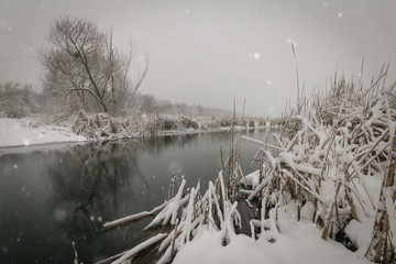 Winter snowy landscape. Canes and trees under the snow on the riverbank.